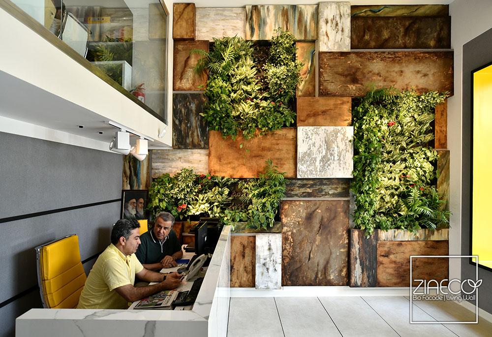 دیوار سبز یا گرین وال ضیااکو به روش هیدروپونیک در فضای داخلی مشاور املاک فرسا واقع در الهیه تهران