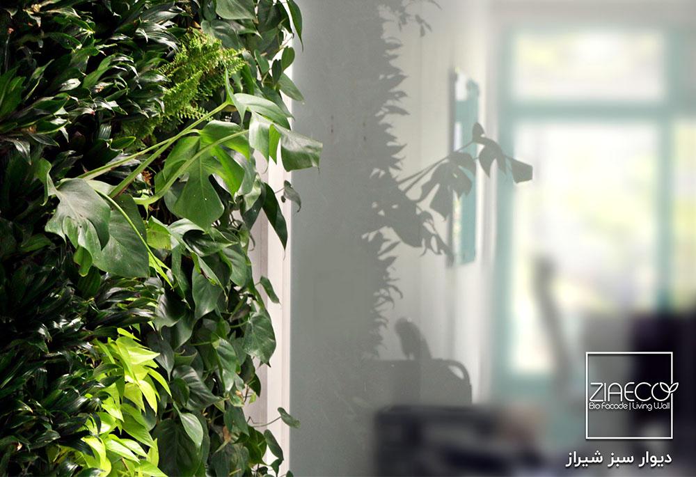 دیوار سبز یا گرین وال ضیااکو به روش هیدروپونیک در فضای داخلی استارت آپ آچاره واقع در ونک تهران