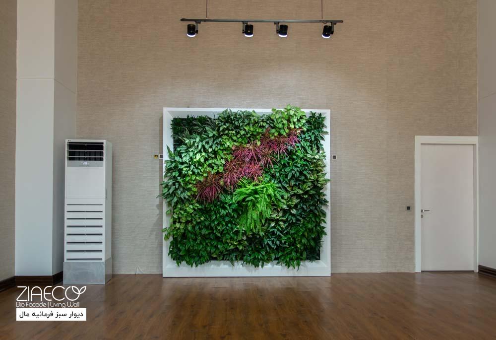 دیوار سبز یا گرین وال ضیااکو به روش گلدان دیواری در فضای داخلی ساختمان اداری فرمانیه مال واقع در فرمانیه تهران