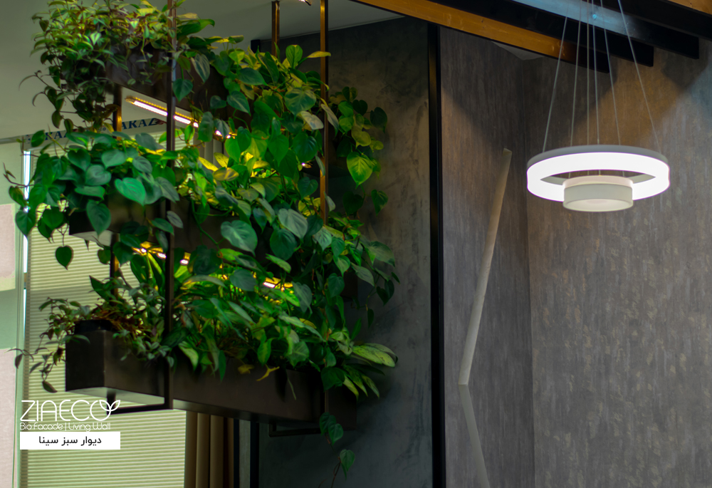 دیوار سبز یا گرین وال ضیااکو به روش هیدروپونیک در فضای داخلی یک اداره در مجتمع تجاری سینا واقع در سعادت آباد تهران