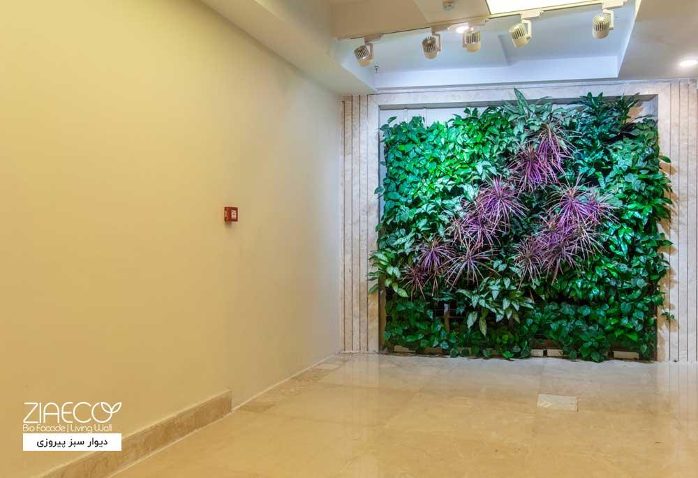 دیوار سبز یا گرین وال ضیااکو به روش گلدان های عمودی یا Tray در فضای داخلی یک مجتمع اداری واقع در پیروزی تهران