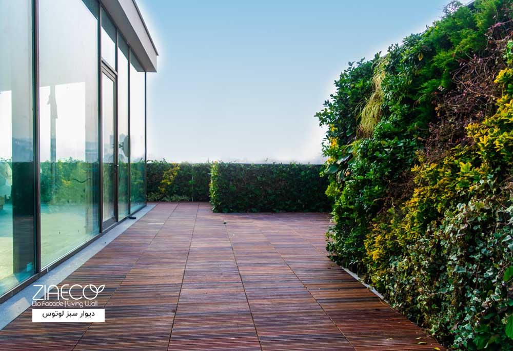 دیوار سبز یا گرین وال بیرونی ضیااکو به روش هیدروپونیک در فضای باز پاویون شرکت ساختمانی لوتوس واقع در زعفرانیه تهران