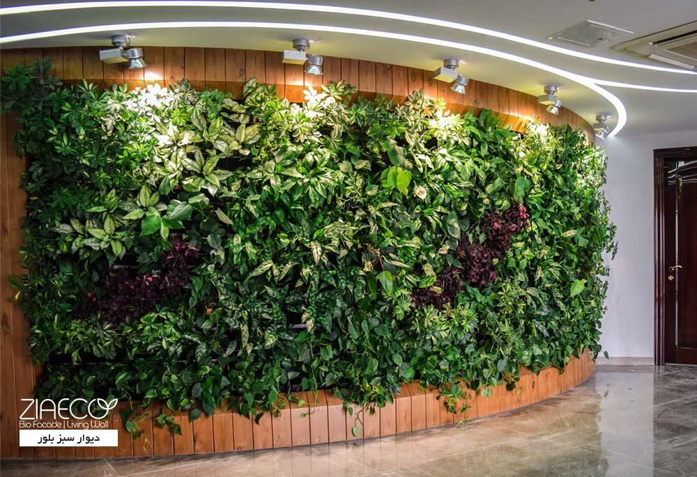 دیوار سبز یا گرین وال ضیااکو به روش Tray (گلدان های دیواری) در مجتمع قصر بلور واقع در خیابان شوش تهران