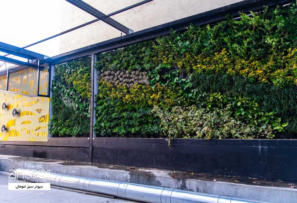 دیوار سبز یا گرین وال ضیااکو به روش هیدروپونیک در فضای بیرونی مجتمع تجاری لئومال واقع در فرشته ی تهران
