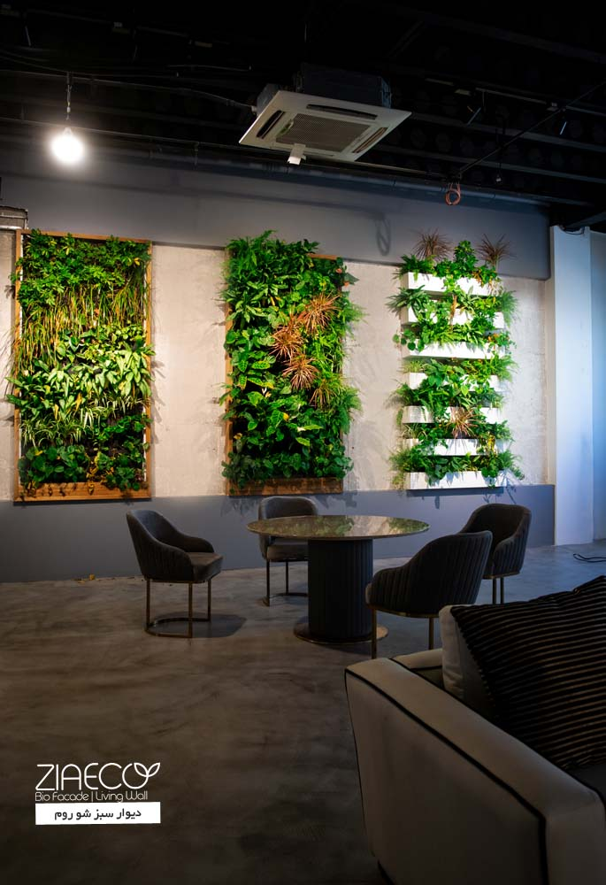 دیوار سبز یا گرین وال داخلی ضیااکو به روش هیدروپونیک و دیگر روش ها در فضای داخلی شو روم لئومال واقع در فرشته ی تهران