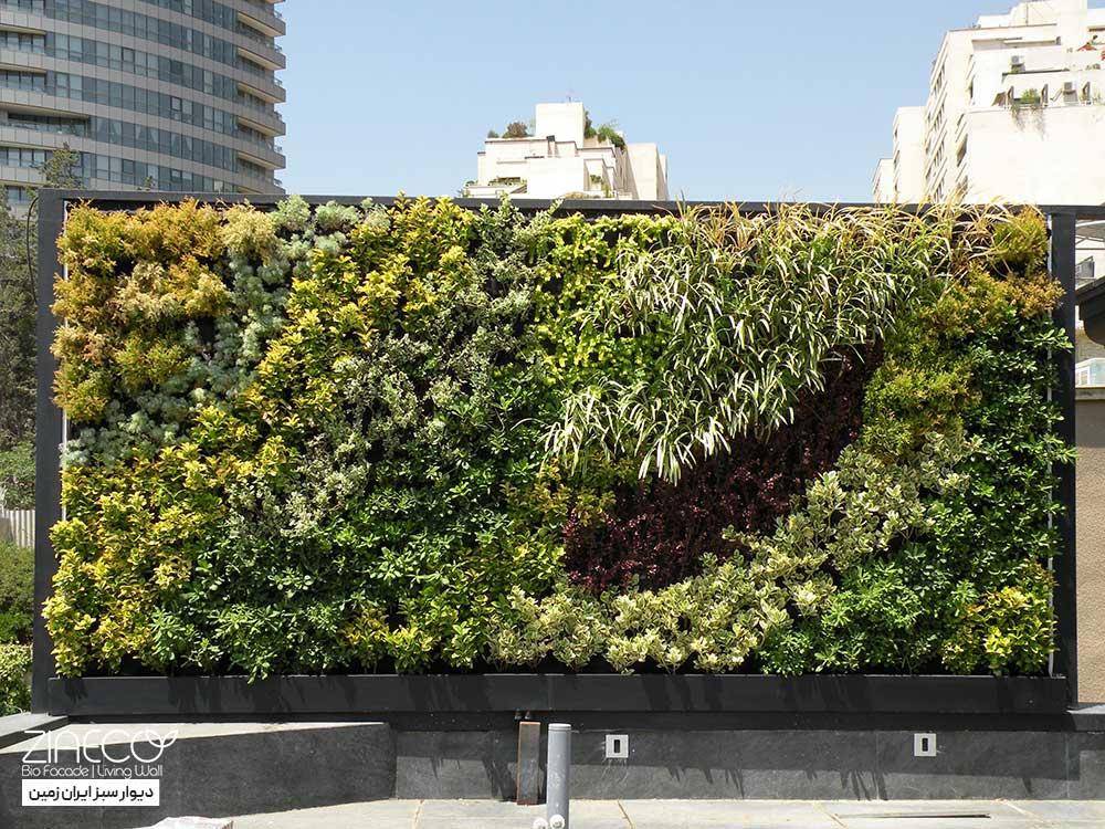 دیوارسبز یا گرین وال ضیااکو به روش هیدروپونیک در فضای بیرونی تراس یک خانه در ایران زمین تهران