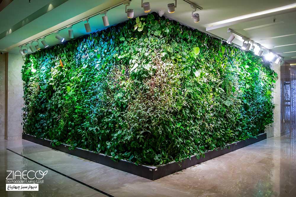دیوار سبز یا گرین وال ضیااکو به روش هیدروپونیک در لابی یک ساختمان مسکونی واقع در جنت آباد تهران