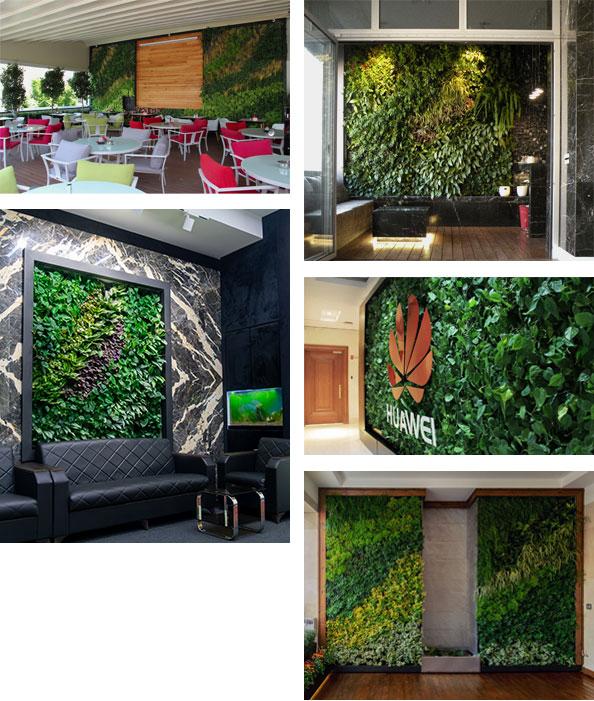دیوار سبز ضیااکو